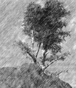 Sketch Digital Art - Black and White Tree Sketch by David Lane