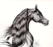 Drawing Of A Horse Head Framed Prints - Black Arabian Head View from Right Framed Print by Cheryl Poland