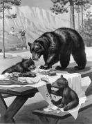 Scavengers Posters - Black Bear Mother And Her Cubs Raid Poster by Walter A. Weber