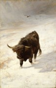 Grazing Snow Prints - Black Beast Wanderer  Print by Joseph Denovan Adam