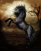 Animals Digital Art Posters - Black Beauty Poster by Shanina Conway