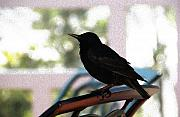 Linda Knorr Shafer - Black Bird