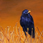 Starlings Paintings - Black Bird by Marina Petro