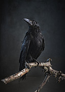 Fantasy Photos - Black Bird Sitting On An Old Branch by Zena Holloway