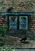 Symbolic Waiting Prints - Black Birds Sitting on Roof by Window Print by Jill Battaglia
