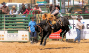 Rodeo Photos - Black Bucking Bronc by Cheryl Poland