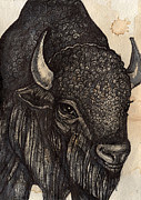 Buffalo Mixed Media Framed Prints - Black Buffalo Framed Print by Lynnette Shelley