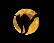 Hallows Eve Framed Prints - Black Cat Moon Framed Print by Al Powell Photography USA