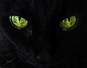 Felines Dale Ford Prints - Black Cat Mystique Print by Dale   Ford