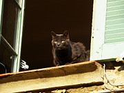 Ledge Photos - Black Cat on the Window Ledge by Lainie Wrightson