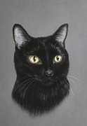 Life-like Pastels Posters - Black cat Poster by Patricia Ivy
