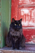 Cat Photo Posters - Black Cat Red Door Poster by Carol Leigh