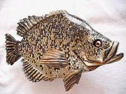 Aquatic Life Reliefs - Black Crappie Number One by Lisa Ruggiero