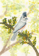 Titmouse Paintings - Black Crested Tufted Titmouse by Elise Boam
