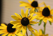 Photography - Black eye Susan by Debra Martelli