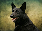 Shepherds Digital Art Prints - Black German Shepherd Dog III Print by Sandy Keeton