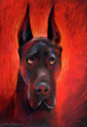 Red Prints Drawings Framed Prints - Black Great Dane dog painting Framed Print by Svetlana Novikova