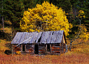 Abandoned Digital Art - Black Hills Homestead Cabin by Terril Heilman