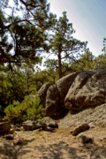 South Dakota Tourism Photos - Black Hills II by Mike Oistad