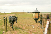 Lamp Post Prints - Black Horse And The Lamp Print by James Steele