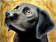 Black Family Pastels Framed Prints - Black Lab Framed Print by Carol Grimes