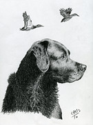 Duck Hunting Drawings - Black Lab by Chris Trudeau