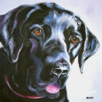 Oil Drawings - Black Lab No Ordinary Love by Susan A Becker
