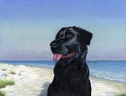 Lab Puppy Posters - Black Lab on Beach Poster by Heather Mitchell
