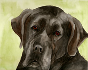 Black Labrador Print by Cherilynn Wood