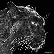 Mammals Digital Art Prints - Black Leopard 2 Print by Larry Linton