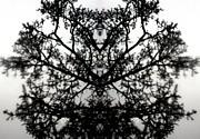 Amy Sorrell - Black Mold