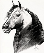 Horse Images Drawings Prints - Black Morgan Stallion Print by Cheryl Poland