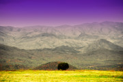Lonely Tree Prints - Black Mountains AZ Print by Susanne Van Hulst