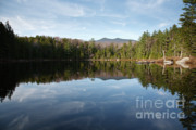 Landscape.ecosystem Posters - Black Pond - Lincoln Woods New Hampshire USA Poster by Erin Paul Donovan