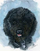 Standard Paintings - Black Poodle Puppy by Sheryl Heatherly Hawkins