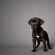 Front View Metal Prints - Black Puppy Metal Print by Square Dog Photography