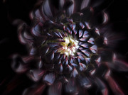 Macro Photos Posters - Black Purple Dahlia - Flower Photograph Poster by Artecco Fine Art Photography - Photograph by Nadja Drieling