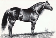 Pen And Ink Drawing Art - Black Quarter Horse by Cheryl Poland