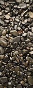 Pebble Art - Black River Stones Portrait by Steve Gadomski