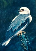 Rita Palm - Black Shouldered Kite
