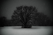 Black Snow Tree Print by Sonja Quintero