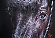 Mammals Drawings Prints - Black stallion Print by Elena Kolotusha