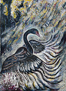 Swans... Drawings - Black Swan in early Morning Mists by Helen Duley