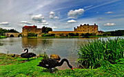 Castle. Birds Framed Prints - Black Swans at Leeds Castle II Framed Print by Bel Menpes