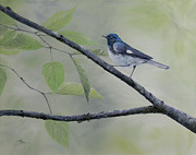 Warbler Paintings - Black-Throated Blue Warbler by Dee Carpenter