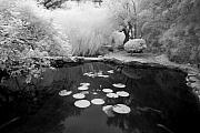 Infrared Originals - Black Water Pond by John Gusky