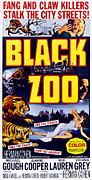 Lion Poster Prints - Black Zoo, Mid-right Michael Gough Print by Everett