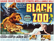 Lion Poster Prints - Black Zoo, Middle Right Michael Gough Print by Everett
