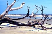 Blackbeard Island Beach Print by Thomas R Fletcher
