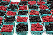 Baskets Posters - Blackberries and Rasberries - 5D17827 Poster by Wingsdomain Art and Photography